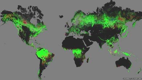 Forest change mapped by Google Earth | Geography in IB @BIS | Scoop.it