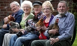 Hen-keeping – a cracking new therapy for older people - The Guardian | nursing | Scoop.it