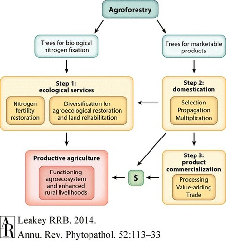 The Role of Trees in Agroecology and Sustainable Agriculture in the Tropics   MycorWeb Plant-Microbe Interactions   Scoop.it