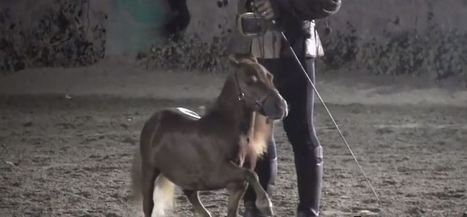 'World's smallest pony' kidnapped by mafia | Quite Interesting News | Scoop.it