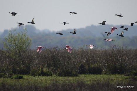 ÁREAS PROTEGIDAS DEL URUGUAY: ¿qué es un área protegida? | Biomas del Uruguay para tercer grado | Scoop.it