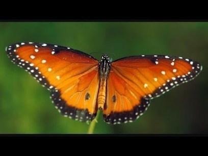 Stunning Nature Films by Louie Schwartzberg | The Wonder of It All | Scoop.it