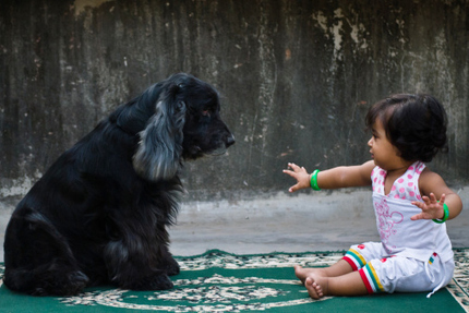 10 Heroic Dogs Who Will Leave You In Awe | Liquid Health News | Scoop.it
