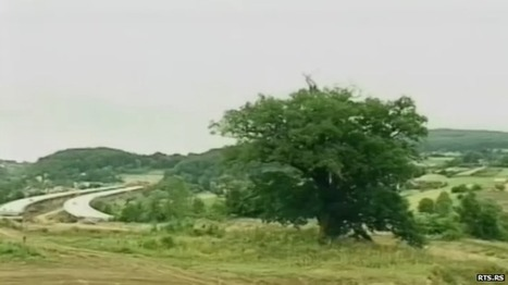 Serbia: Historic oak tree stalls motorway construction - BBC News | Farming, Forests, Water & Fishing (No Petroleum Added) | Scoop.it