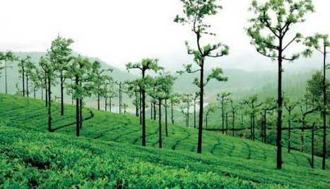 Problem with plantations - Daily Mirror | Food and Drink multinationals | Scoop.it