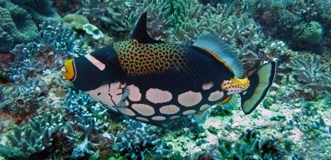 Comment les poissons des récifs voient-il leur environnement ? | Biodiversité | Scoop.it