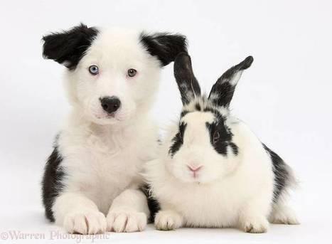 Animal Pairing – Quand des animaux partagent les mêmes couleurs | Biodiversité | Scoop.it