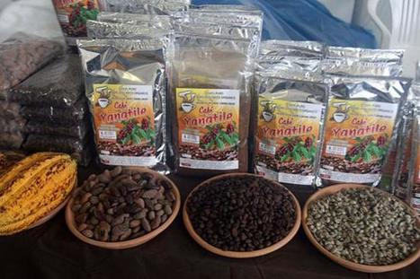 Envíos de cooperativas productoras de café fue de US$ 98 millones a octubre | Cooperativismo PERÚ | Scoop.it