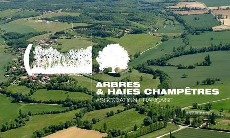 Agroforesteries et arbres champêtres | agro-foresterie | Scoop.it
