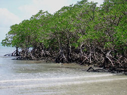 Island City violates Ramsar Convention: WWF - Pakistan Daily Times | Mangroves in Pakistan | Scoop.it