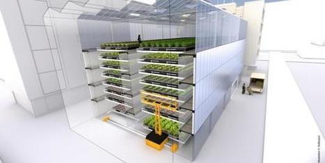 L'usine à salades | Urbanisme vivant | Scoop.it