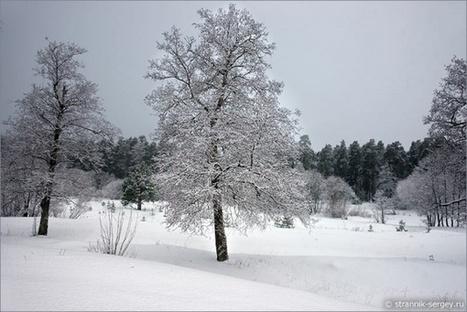 О зиме / Блог им. ctaci / Творческие блоги творческих людей. | Творческие блоги | Scoop.it
