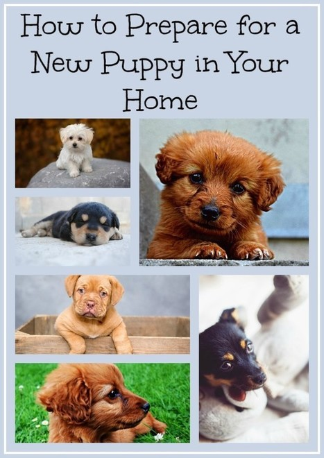 How to Prepare for a New Puppy in Your Home – Free eBook | Homemaking | Scoop.it