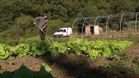 Dans l'Hérault, un maraîchage bio et intensif, c'est possible | Chimie verte et agroécologie | Scoop.it