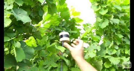 Utiliser sons et odeurs pour protéger les plantes contre les insectes | Confidences Canopéennes | Scoop.it
