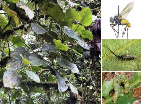 New plant species a microcosm of biodiversity / Découverte d'une nouvelle plante servant d'abri à 40 ou 50 espèces d'insectes   EntomoNews   Scoop.it