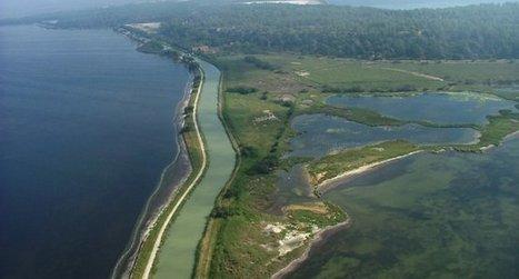 Découvrez le site Ramsar des étangs littoraux de la Narbonnaise | Confidences Canopéennes | Scoop.it
