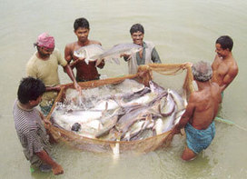 Fisheries and livestock census scheduled for 2014 - Feed Machinery | ALS Animals | Scoop.it