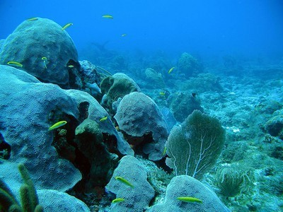 Underwater Robots to Repair Coral Reefs   All about water, the oceans, environmental issues   Scoop.it