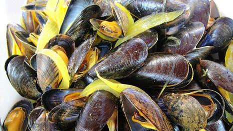 Moules, coques, Saint-Jacques. En Seine-Maritime, une algue toxique, la pêche interdite | Toxique, soyons vigilant ! | Scoop.it