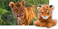Wildlife Conservation, Endangered Species Conservation | Earth Day 2013 | Scoop.it