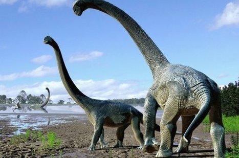 Une nouvelle espèce de dinosaure découverte | Chroniques libelluliennes | Scoop.it