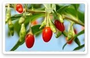 GOJIBERRY – GojiMax ® Herbal Extract   Natural Remedies For Health Benefits   Scoop.it