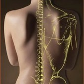 Auto Accident Chiropractor's services to the victims of auto accidents   Chiropractic treatment in jacksonville   Scoop.it