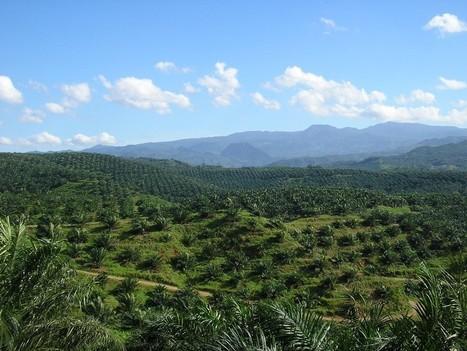Huile de palme ou agrocarburant : qui est responsable de la déforestation ? - Néoplanète | Chronique d'un pays où il ne se passe rien... ou presque ! | Scoop.it