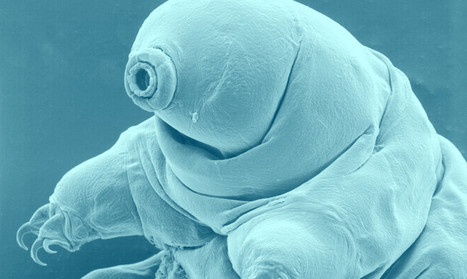 Tough little 'water bears' inspire new glass - Futurity | Knowmads, Infocology of the future | Scoop.it