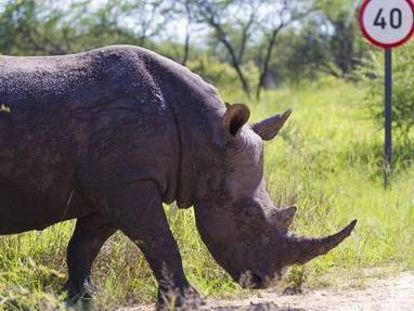Rhino poachers arrested | World Regional Geography | Scoop.it