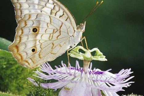 Attracting Butterflies   Top 10 Butterfly Host Plants   Help Save Our Beautiful Bees and Wildlife.Together we can make a difference.   Scoop.it