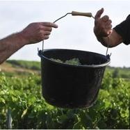 Qualité du millésime 2016 dans le Languedoc-Roussillon   Winemak-in   Scoop.it