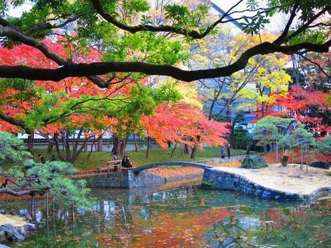 Enchanted! Tokyo ... | Landscaping & Gardening | Scoop.it
