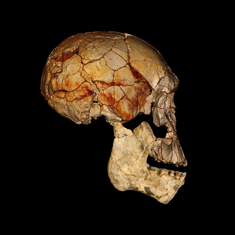 Tree Climbers, Wood Eaters, and More: The Top 10 Human Evolution Discoveries of 2012 | Paleoanthropology news | Scoop.it