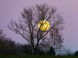 Lune de miel - Learn French at Lawless French | French and France | Scoop.it