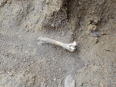 Scheletro umano più antico della Sardegna - Adnkronos Cultura   World Neolithic   Scoop.it