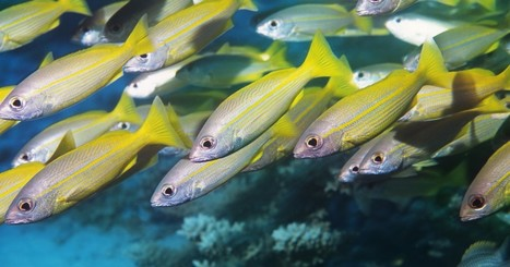 Report: Half the World's Fish Population Lost Since 1970 | Our Evolving Earth | Scoop.it