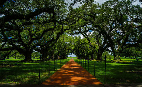 A stroll through the Oak Alley | Oak Alley Plantation: Things to see! | Scoop.it