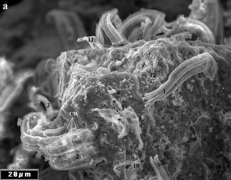 Des traces de vie extraterrestre fossilisées sur une météorite ? | Planet Techno Science | Aux origines | Scoop.it