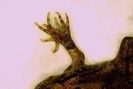 Mutant cane toads invade Gladstone | Daniel.F-GeogLog | Scoop.it