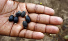 In a world hungry for biofuels, food security must come first | Questions de développement ... | Scoop.it