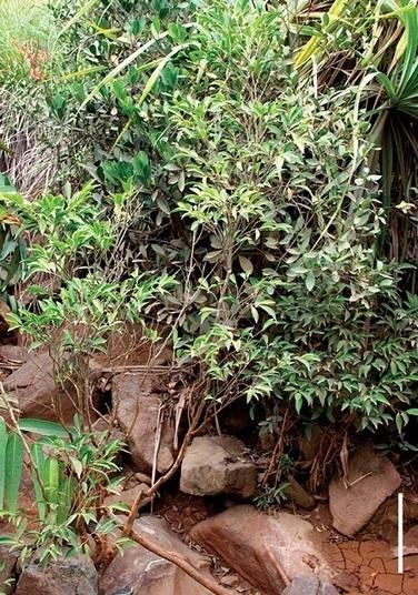 La dépollution du sol par les plantes testée en France | Tout le web | Scoop.it
