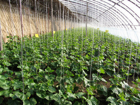 Organic Farming in China   PRI's The World   Food issues   Scoop.it