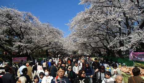 Sakura Viewing 2014: Ueno Park & Pond | JapanxHunter | Tokyo Japan Lifestyle, Food & Drinks! | Scoop.it