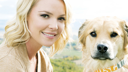 Katherine Heigl launches charity pet product line 'Just One'   Pet News   Scoop.it