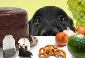Dangerous Foods for Dogs | Natural Pet Care | Scoop.it