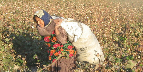 Forced Labor Rampant in Uzbekistan Fall Cotton Harvest | Solidarity Center | CENTRAL ASIAN RE.SOURCES | Scoop.it