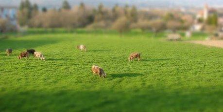 Pourquoi le lait de mauvaise qualité, néfaste pour la santé, risque de se généraliser | Toxique, soyons vigilant ! | Scoop.it