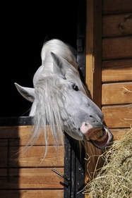 My Horse Is Acting Out: Is He Stressed?   The Natural Horse   Scoop.it